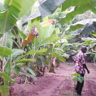 Un jardin potager au poste de santé